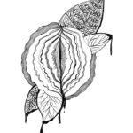 Amelia Grace Illustration 1